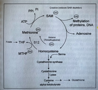 How well is your methylation (detoxification) cycle working?